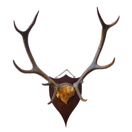 アンティーク 鹿の角 壁掛け